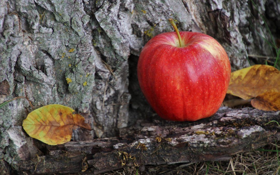 Cogli la mela
